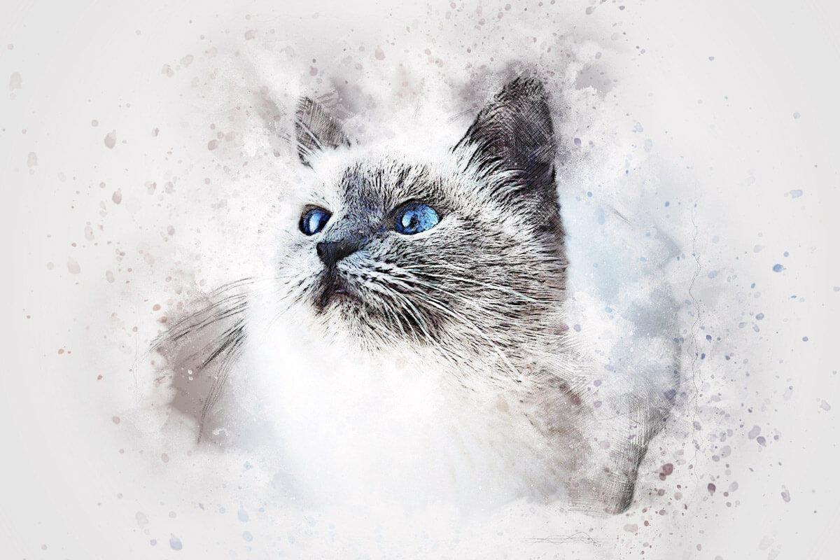 """『吾輩は猫である』の""""猫""""から見た""""人間""""の姿【漱石の見た景色】"""