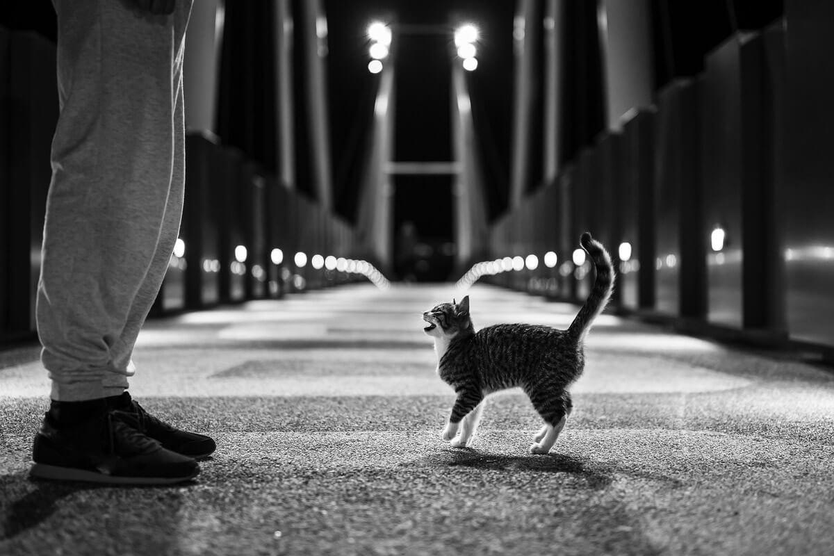 『わが猫』だんだん挑戦的になる吾輩の言葉
