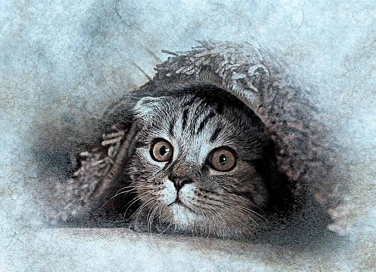 """『わが猫』はやっぱ""""猫""""が主人公 猫本位で見た人間像はこんな感じ"""