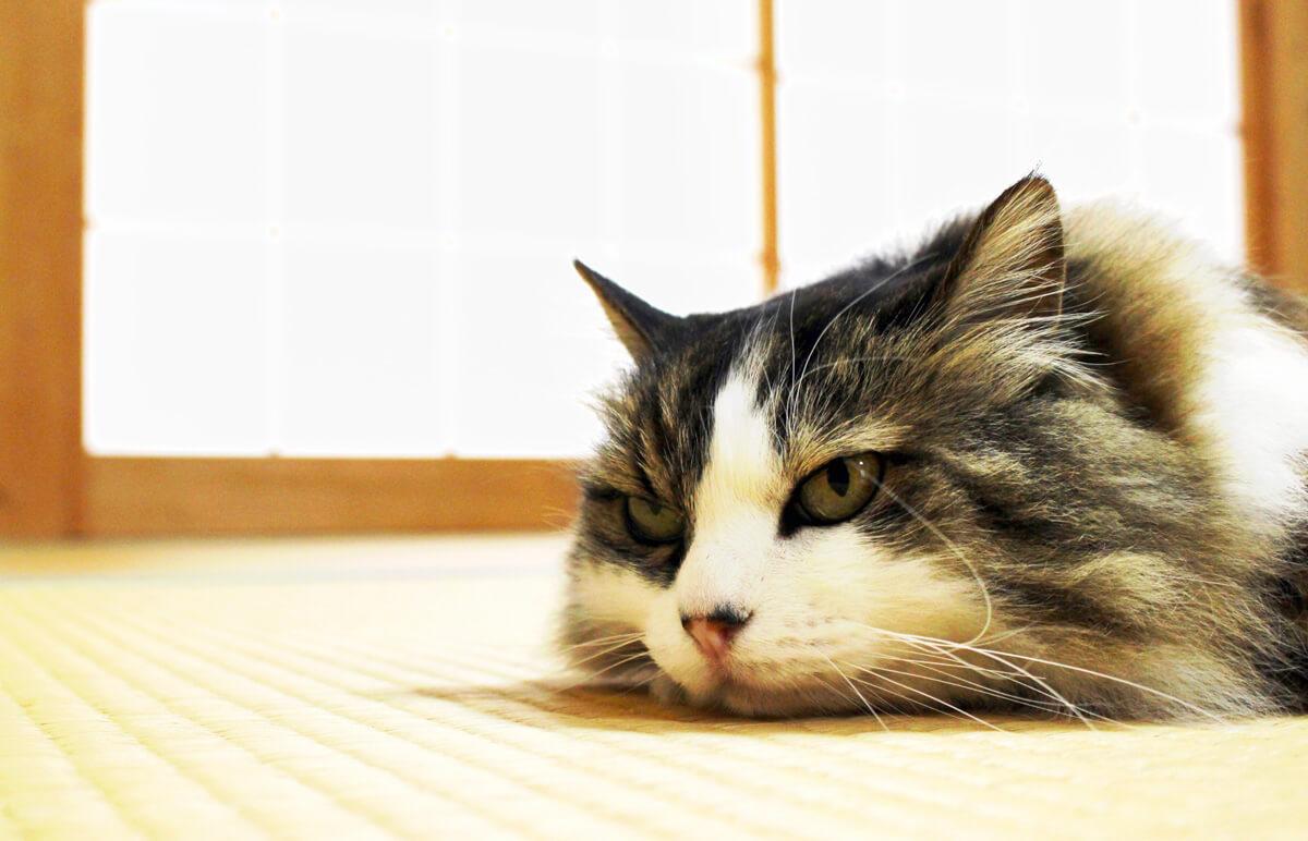 """『吾輩は猫である』の""""猫""""から見た""""人間"""""""